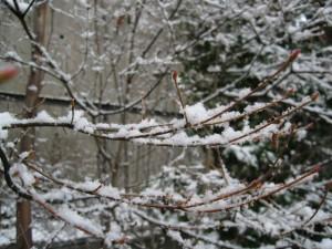 snow090124