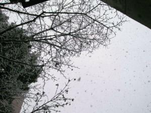 snow090124_2